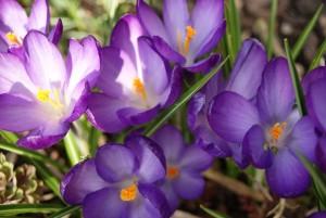 flower-657179_960_720